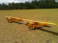 Name: little cub.jpg