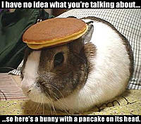 Name: Bunnywithapancakeonitshead.jpg