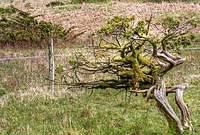 Name: Moss Side.jpg Views: 91 Size: 137.8 KB Description: