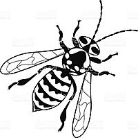 Name: Hornet.jpg