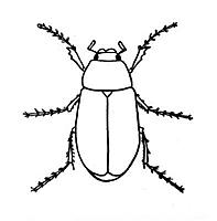 Name: Lightning-bug-coloring-pages.jpg
