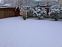Name: .jpg Views: 28 Size: 290.8 KB Description: The snow in my back yard that has remained, thus hindering our next trip to TT.