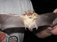 Name: stupid bat (2304 x 1728).jpg Views: 393 Size: 59.6 KB Description: