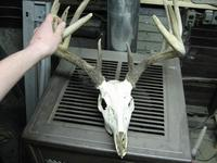 Name: deer (2304 x 1728).jpg Views: 275 Size: 88.2 KB Description: