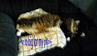 Name: DSCN0063 copy.jpg Views: 56 Size: 173.0 KB Description: The Skittels boy kitty