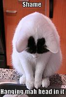 Name: Hanging Head in Shame.jpg Views: 203 Size: 78.4 KB Description: