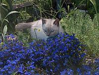 Name: BLUE FLOWER2.JPG Views: 49 Size: 86.0 KB Description: