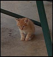 Name: Lucky 01.jpg Views: 70 Size: 42.4 KB Description: Lucky