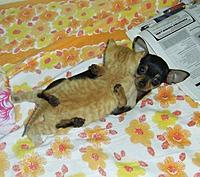 Name: puppy love.jpg Views: 237 Size: 35.6 KB Description: