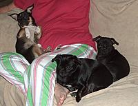 Name: Peppie, Katrina, and Bubba..JPG
