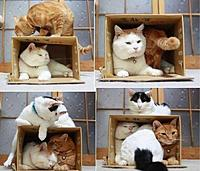 Name: The Crazy Cat Lady Starter Kit. It packs itself for shipping..jpg