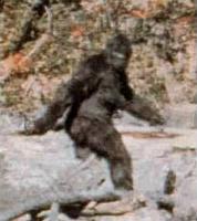 Name: Bigfoot.jpg Views: 63 Size: 12.8 KB Description: