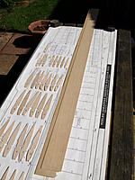 Name: Picture 196.jpg
