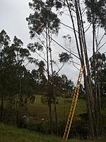 Name: 2012-05-27 17.29.42.jpg Views: 89 Size: 218.7 KB Description: the huge ladder