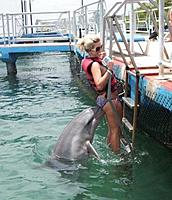 Name: a4809670-11-curious-dolphin.jpg