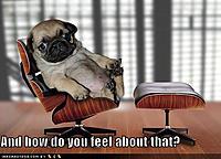 Name: a4819532-97-funny-dog-pictures-psychiatrist-pug.jpg Views: 80 Size: 125.8 KB Description: