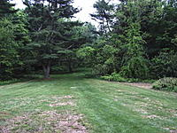 Name: Tree facelift 5-26-11 007.jpg