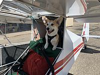 Name: IMG_4577 3.jpeg Views: 20 Size: 2.91 MB Description: And there's even a baggage compartment for Archie.