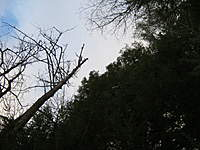 Name: IMG_0343.jpg