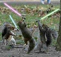 Name: jedi-squirrel.jpg
