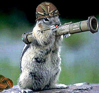 Name: soldier-squirrel.jpg