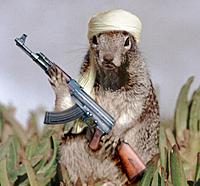 Name: terrorist-squirrel.jpg