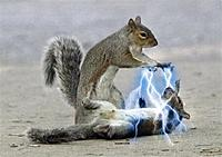 Name: squirrel_death_rays.jpg