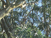 Name: IMG_1110.jpg