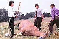 Name: beating_a_dead_horse.jpg Views: 42 Size: 22.2 KB Description: