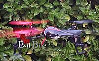 Name: EvilBug10.jpg Views: 174 Size: 220.1 KB Description:
