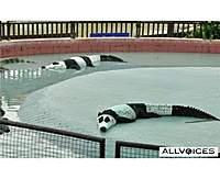 Name: 43681179-crocodile-panda.jpg Views: 1664 Size: 45.9 KB Description: