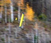 Name: blade at springvalley.jpg