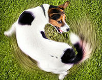 Name: dog-chasing-tail2.jpg Views: 103 Size: 31.1 KB Description: