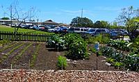Name: Garden1.jpg Views: 91 Size: 306.4 KB Description: