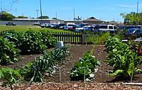 Name: Garden3.jpg Views: 91 Size: 287.3 KB Description: