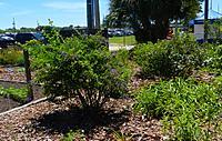 Name: Garden4.jpg Views: 78 Size: 367.6 KB Description: