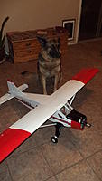 Name: The Beave and Zoe.jpg Views: 76 Size: 246.6 KB Description: Look close! my 88 lb German Shepard stands guard!