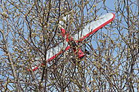 Name: carbon cub in tree.jpg