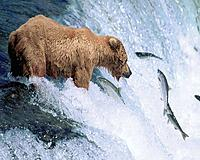 Name: Grizzly_Bear_Gone_Fishing-1280x1024.jpg