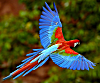 Name: 100pixel macaw.png Views: 59 Size: 18.6 KB Description:
