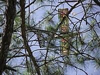 Name: tree top landing.jpg Views: 144 Size: 296.3 KB Description: