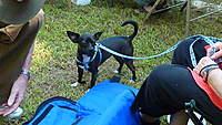 Name: P1040133.jpg Views: 90 Size: 113.6 KB Description: Burkes dog.