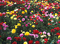 Name: flowers.jpg
