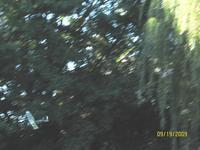 Name: Flying 9-19-09 006.jpg Views: 75 Size: 79.9 KB Description: