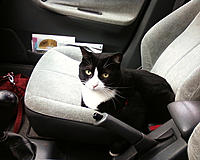 Name: cat-on-car-seat.jpg