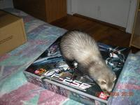 Name: DSCN0836_(1600_x_1200).jpg