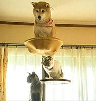Name: animals-dont-fake-comedy-they-just-are-funny-period-66-photos-25-20.jpg Views: 123 Size: 45.0 KB Description: