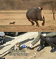 Name: animals-dont-fake-comedy-they-just-are-funny-period-66-photos-21.jpg Views: 118 Size: 73.6 KB Description: