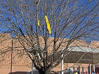 Name: 02-17-08 Yellowbee up in tree.jpg