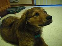 Name: SAM_0320.jpg Views: 106 Size: 190.4 KB Description: Chewie